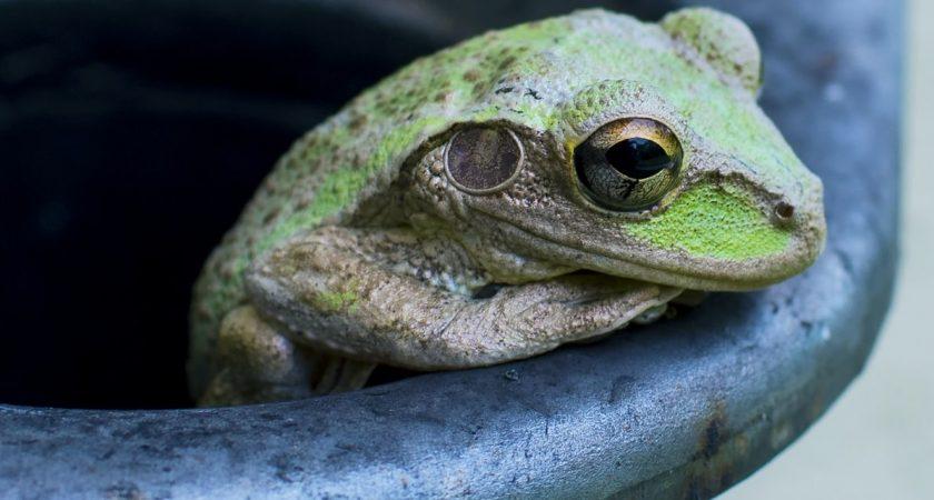 Co łączy żabę i ucznia w procesie edukacji?